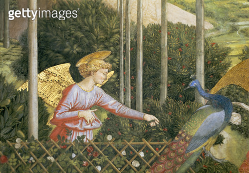 <b>Title</b> : Angel feeding a peacock, detail from the Journey of the Magi cycle in the chapel, c.1460 (fresco) (detail of 70610)<br><b>Medium</b> : <br><b>Location</b> : Palazzo Medici-Riccardi, Florence, Italy<br> - gettyimageskorea