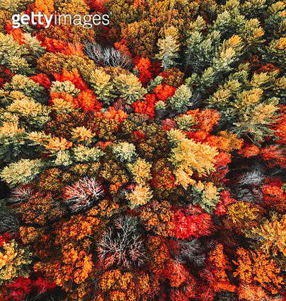 autumnal tree aerial view - gettyimageskorea