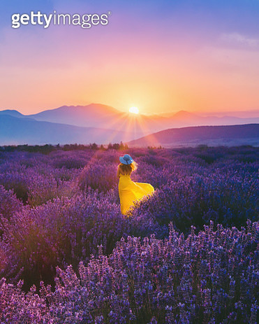 Young woman enjoying lavender field at sunset - gettyimageskorea