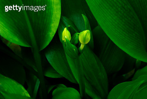 Spring is showing its first signs. Buds everywhere. - gettyimageskorea