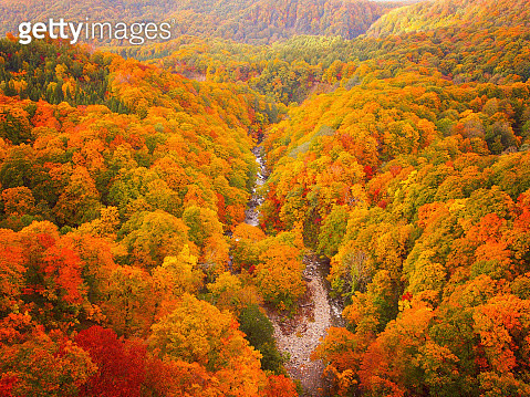 Aomori, Japan - October 24, 2012: One of the leading scenic spots in Towada Hachimantai National Park where rich nature is left untouched. From the Jogakura Shashi Bridge crossing the mountain stream, you can see the mountain streams colored with the autu - gettyimageskorea