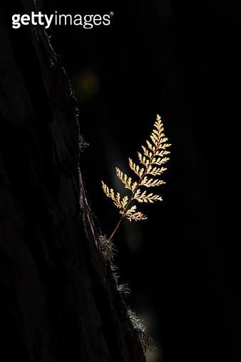 Yellow leaf on dark background - gettyimageskorea
