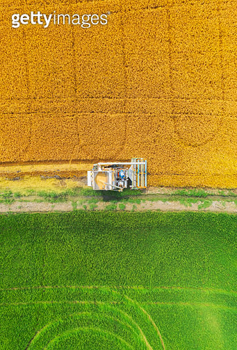 Aerial view Combine Harvester working on the Rice Field. - gettyimageskorea