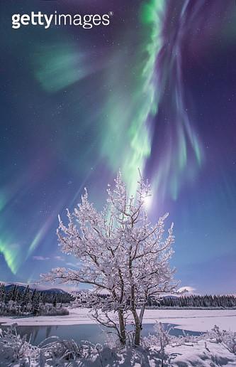Northern lights, Yukon River, Yukon, Canada. - gettyimageskorea