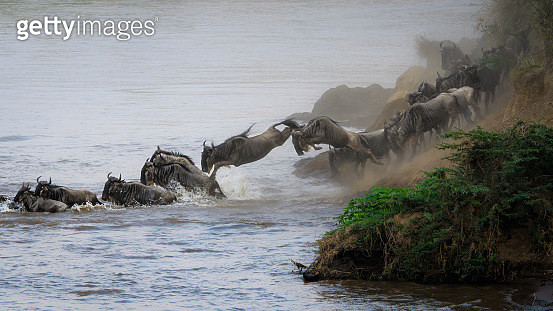 Get In There - gettyimageskorea