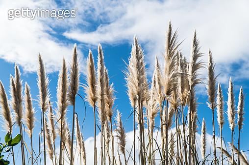 the reeds,Waiheke Island - gettyimageskorea