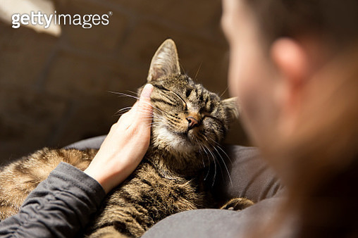 Woman cuddling with cat - gettyimageskorea