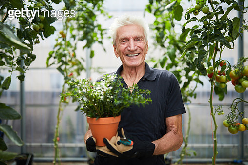 Happy senior man with potted plant in greenhouse - gettyimageskorea