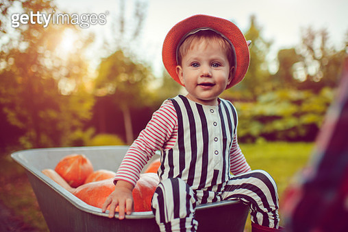 Cute boy with pumpkins in autumn - gettyimageskorea