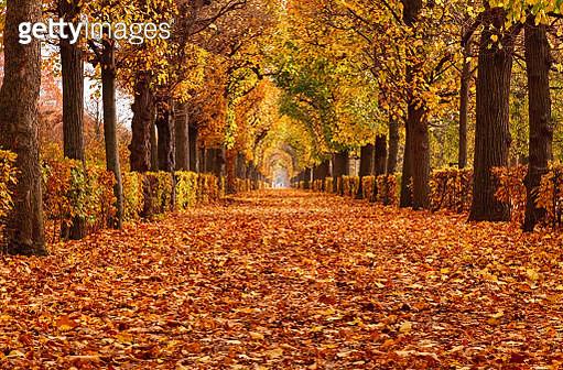 Empty road in autumn Park - gettyimageskorea