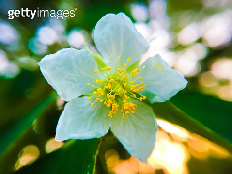 Close-Up Of Fresh Yellow Flowering Plant - gettyimageskorea