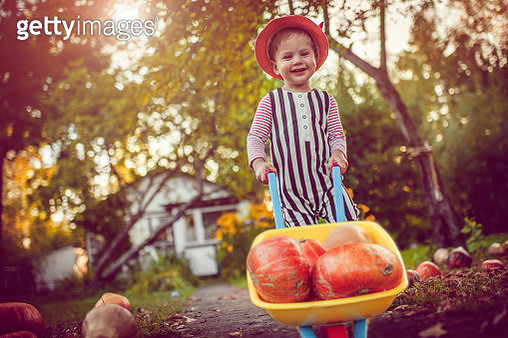 Cute boy with pumpkins in autumn - gettyimageskorea