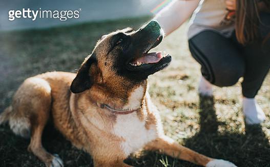 Mongrel Dog on Grass - gettyimageskorea