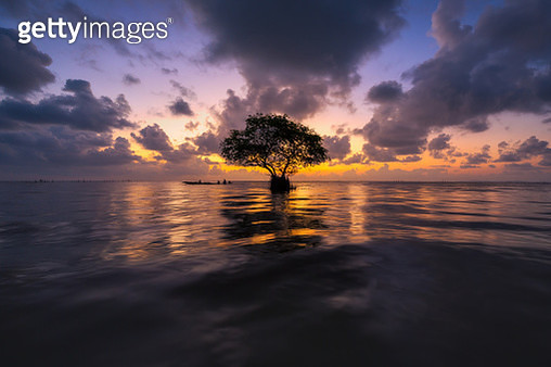 Cork tree at sunrise in Phatthalung - gettyimageskorea