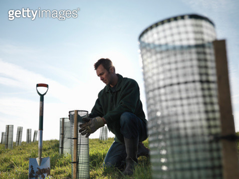 Man Planting Young Trees - gettyimageskorea