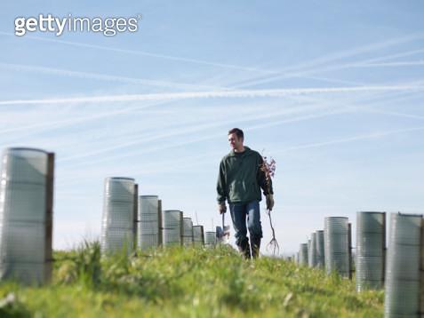 Man In Field With Saplings - gettyimageskorea