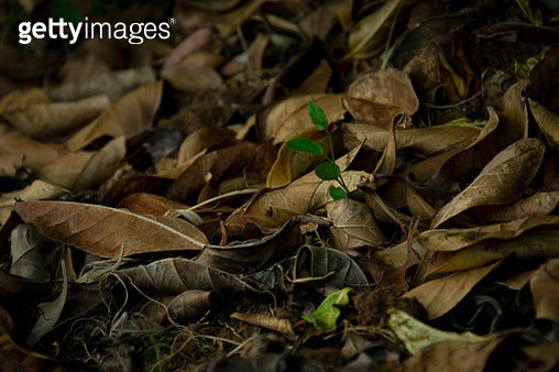 Close-Up Of Dried Leaves On Field - gettyimageskorea
