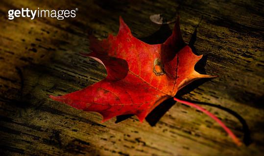 Fall - gettyimageskorea