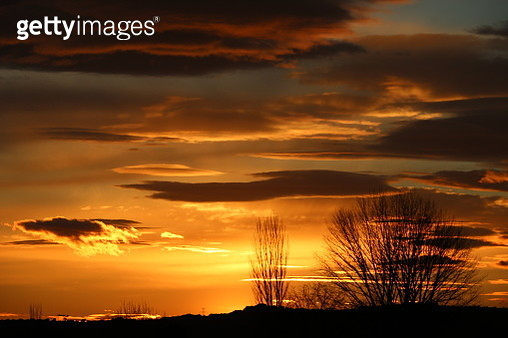 Silhouette Trees Against Dramatic Sky During Sunset - gettyimageskorea