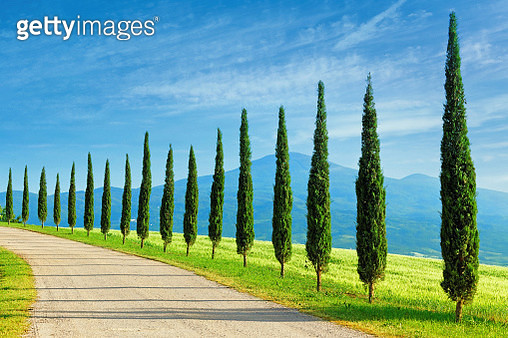 Landscape in Tuscany with cypress trees - gettyimageskorea
