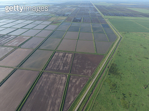 Flooded Rice Paddies. Agronomic Methods Of Growing Rice In The Fields. - gettyimageskorea