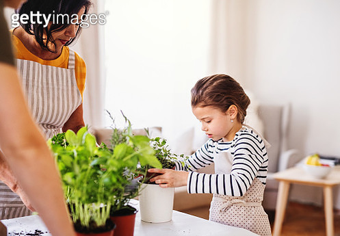 Grandmother, mother and granddaughter planting herbs at home. - gettyimageskorea