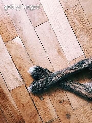 Cropped Image Of Dog Legs On Hardwood Floor - gettyimageskorea