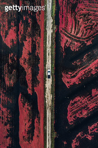 Aerial shot of a truck parked on a dirt track between two cranberry bogs, Massachusetts, United States of America - gettyimageskorea