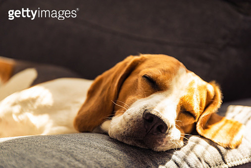 Close-Up Of Dog Sleeping On Bed - gettyimageskorea
