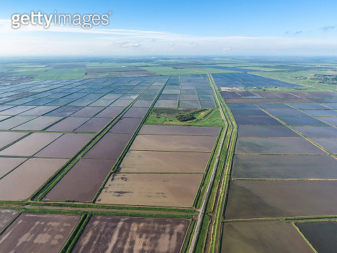 Flooded Rice Paddies. Agronomic Methods Of Growing Rice In The F - gettyimageskorea