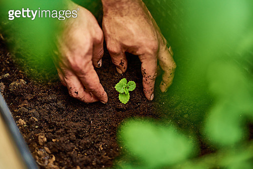 Feed the soil, feed your soul - gettyimageskorea