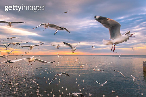 Scenic View of Seagulls Flying on Sea Against Sky During Sunset, Thailand - gettyimageskorea