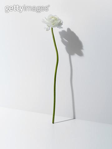 Flowers - gettyimageskorea