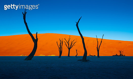 Deadvlei is a white clay pan located near the more famous salt pan of Sossusvlei, inside the Namib-Naukluft Park in Namibia. - gettyimageskorea