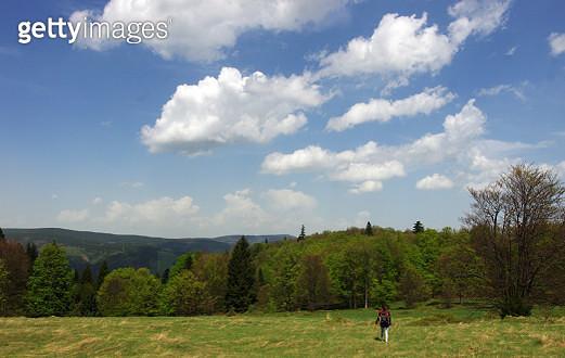 High altitude meadows of Velká Polana - Mionší nature reserve - gettyimageskorea