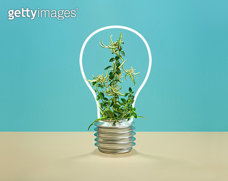 Plants inside a neon light with the shape of a light bulb - gettyimageskorea