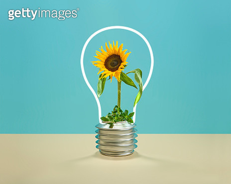 Sunflower inside a neon light with the shape of a light bulb - gettyimageskorea