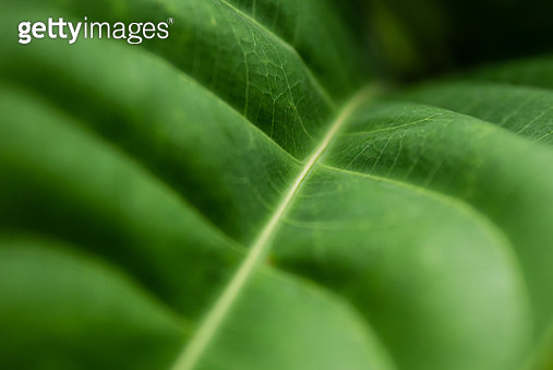 Full Frame Shot Of Green Leaf - gettyimageskorea