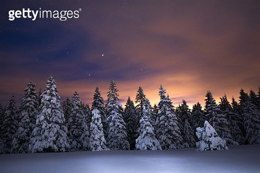 Night Sky Above Winter Forest - gettyimageskorea