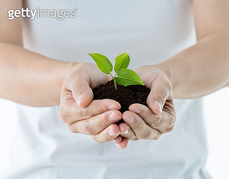 Woman with bunch of soil with small seedling - gettyimageskorea