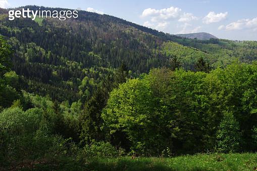 Spring mountainous landscape at Malá Kykula mountain - gettyimageskorea