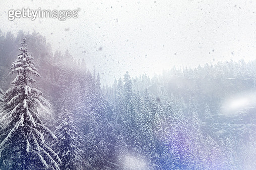 Trees in the snow - gettyimageskorea