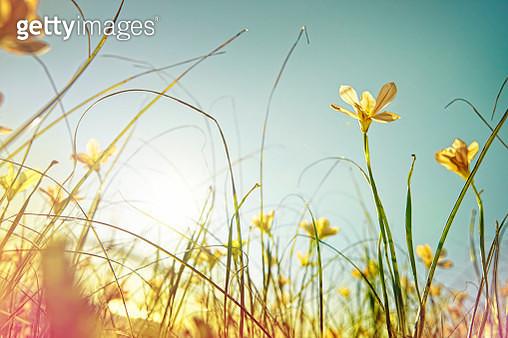 looking up at wild flowers - gettyimageskorea