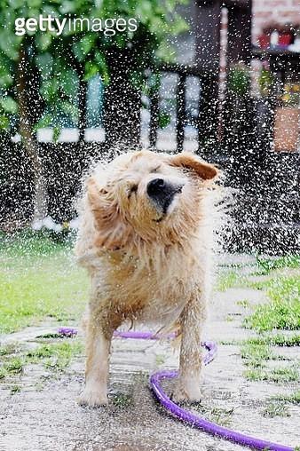 Dog Standing In Water - gettyimageskorea