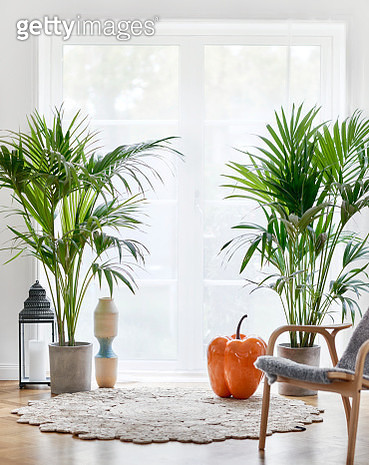 Potted plants in living room - gettyimageskorea