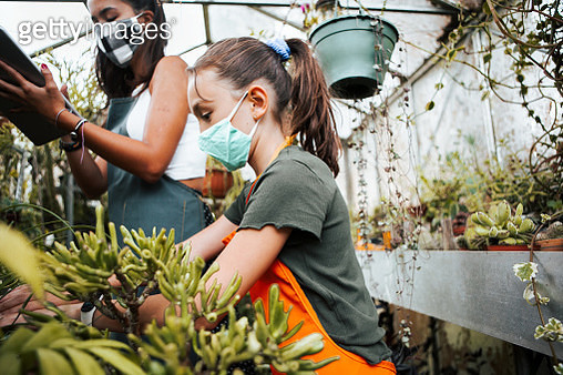 family taking care of plants in greenhouse  with protective facial mask - gettyimageskorea