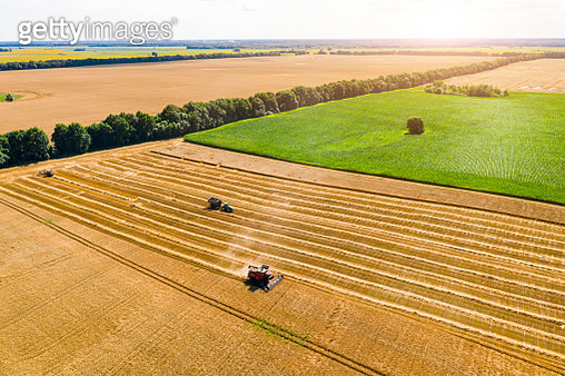 Agricultural machinery in the wheat field - gettyimageskorea