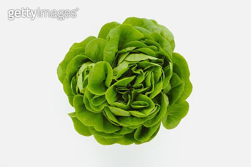 Baby lettuce head - gettyimageskorea