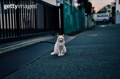 Portrait Of Stray Cat Sitting On Road By Building Gate - gettyimageskorea