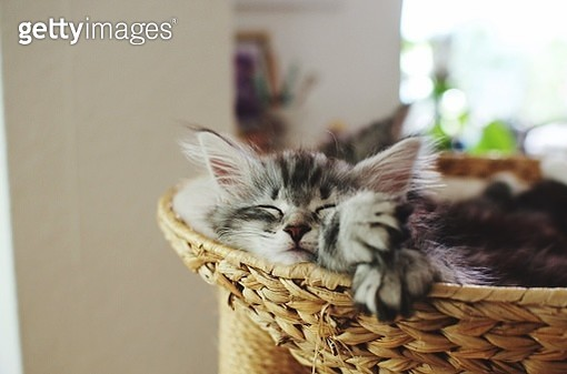 Close-Up Portrait Of Cat - gettyimageskorea